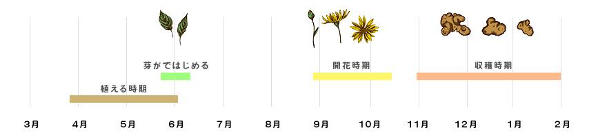 菊芋収穫時期